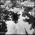 写真: White Lotus II 6-17-18