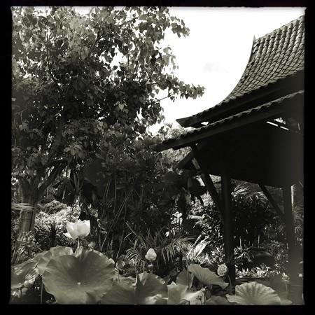 Thai Pavilion_iPhone 7