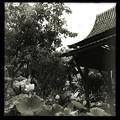 写真: Thai Pavilion_iPhone 7