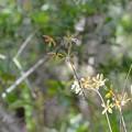 写真: Tampa Butterfly Orchid 6-17-18