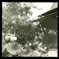 写真: Thai Pavilion_iPhone 4