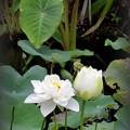 Photos: White Lotus I 7-1-18