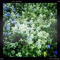 写真: Blue My Mind 9-1-18