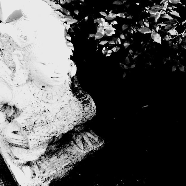 写真: A Face and the Leaves_i4_Hipstamatic280_9-1-18
