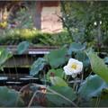 写真: White Lotus 9-15-18