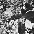 写真: Butterfly Bush 9-15-18