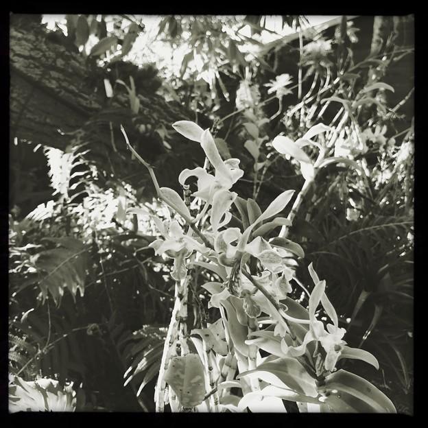 Orchid III 9-15-18