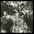 Photos: Orchid III 9-15-18