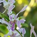 写真: Orchid I 9-15-18
