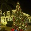 Tree on the Corner 12-8-18