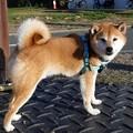 Photos: ぶんたくん 2019-1-13