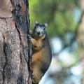 Photos: Fox Squirrel 3-23-19