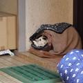 Photos: 猫屋敷だった 2019-1-24