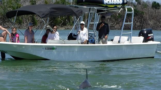 Oooh Dolfins...  4-27-19