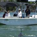Photos: Oooh Dolphins...  4-27-19