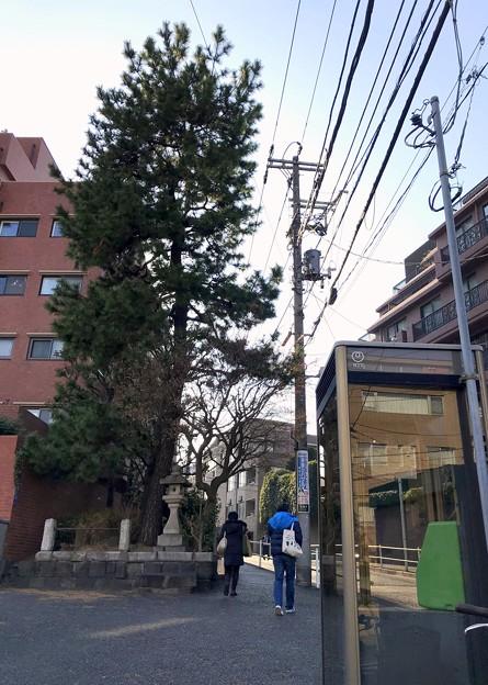一本松坂の一本松 2019-1-30