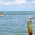 Photos: The Bird and the Watercraft 6-8-19