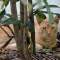 Photos: Shy Marmalade Kitty 6-8-19