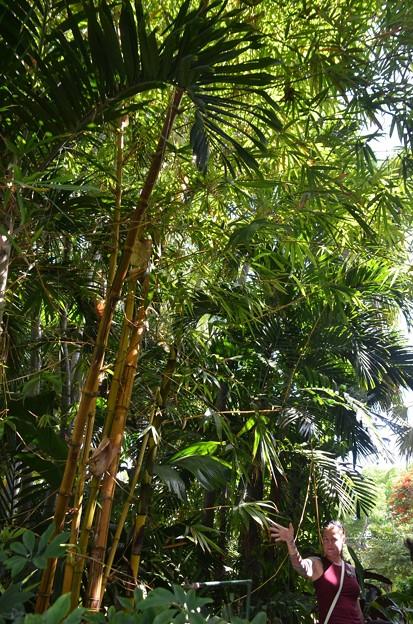 Bamboos 6-8-19