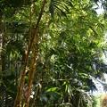 Photos: Bamboos 6-8-19
