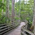 Bald Cypress Woods 7-14-19