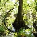 Photos: Bold Cypress 7-14-19