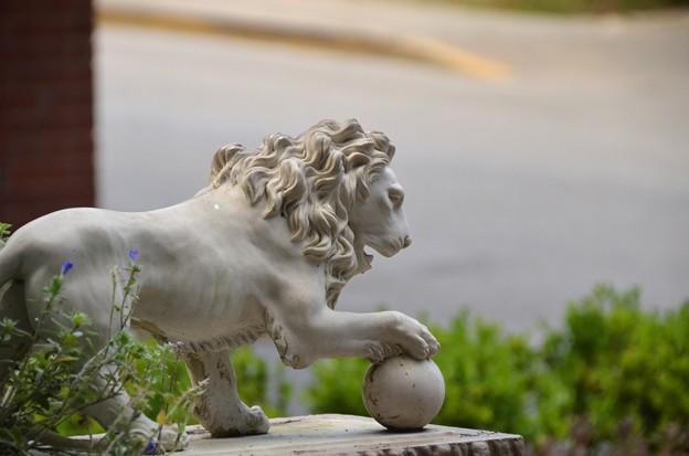 Medici Lion - Mini  5-11-19