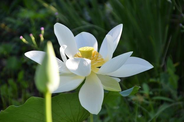 Lotus 2 7-20-19
