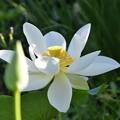 Photos: Lotus 2 7-20-19