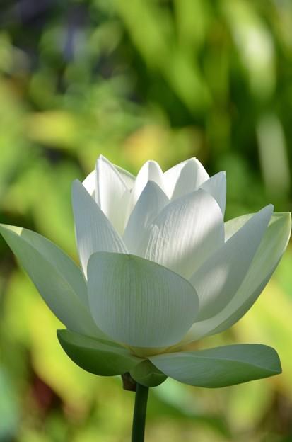 Lotus 3 7-20-19