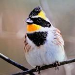 Digisco_birds123