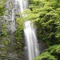 Photos: 新緑の瀑布