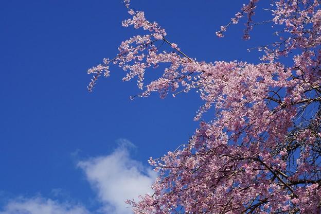 見上げれば春の青空
