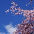 写真: 見上げれば春の青空