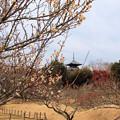 早春の備中国分寺五重塔