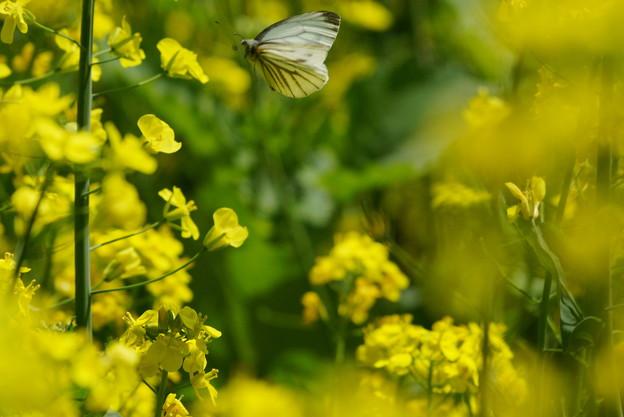 花畑に蝶々が飛びだした