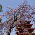 写真: 過ぎてゆく春