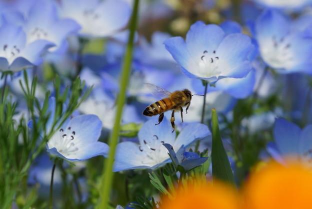 お花畑は、まだ涼しげな風情