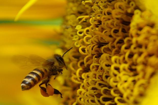 Photos: 私は、蜂族の戦士よ
