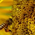 写真: 私は、蜂族の戦士よ