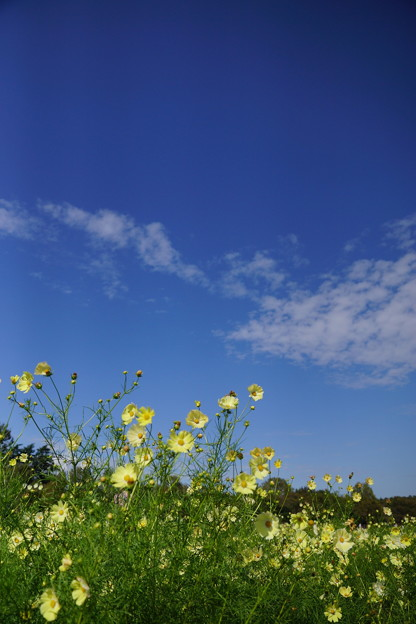 青い空が高いなー 深呼吸しよ