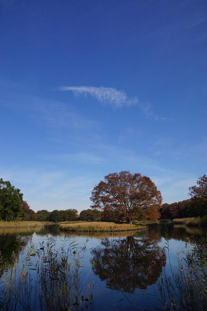 秋の空は青いぞ~
