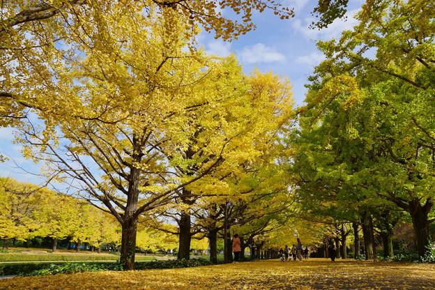 平日の秋の午後を愉しむ