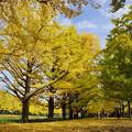 写真: 平日の秋の午後を愉しむ