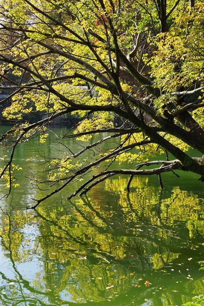 映り気な秋