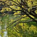 写真: 映り気な秋