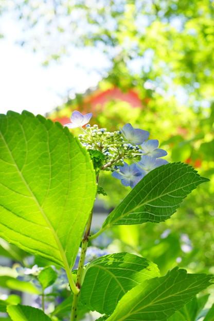 透き通った花