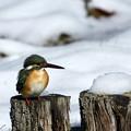 Photos: 雪ん子