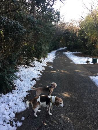 雪がまだまだ残る寒いマリうみ山です