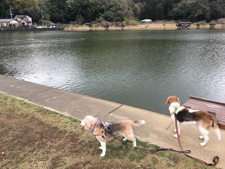 韮山城池親水公園に来たよ!
